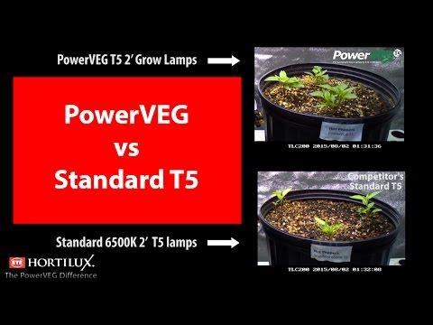 PowerVEG vs Standard T5 Grow Test