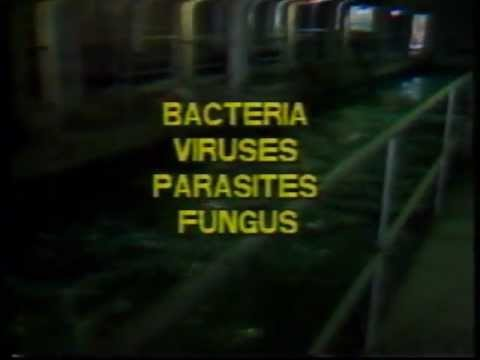 Biological Hazards Facing Sewage Treatment Workers 1989 CUPE Canada