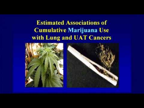 Smoked Cannabis' Effect on Lungs, pt. 3, Dr. Tashkin