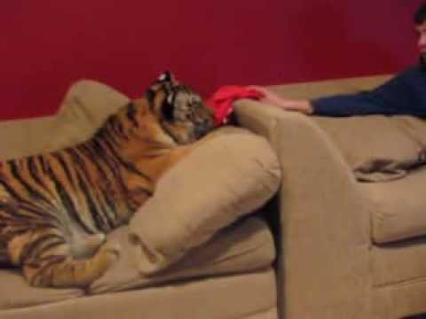 Hanging at home with Jonas the tiger!