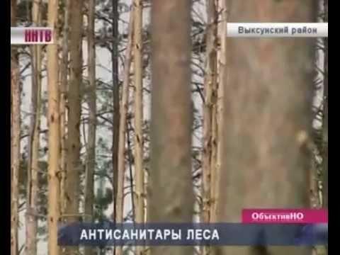 ВНижней Верее под видом горельника вырубают зеленый лес
