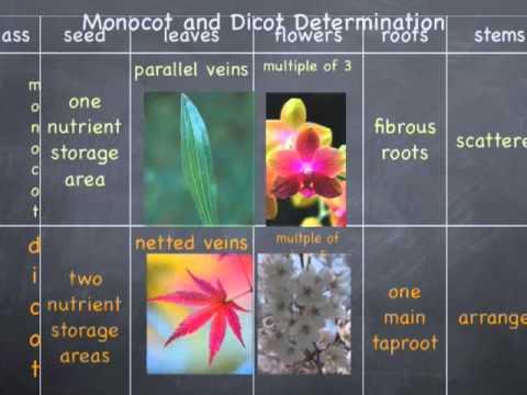 Kingdom Plantae by Harold Villastique