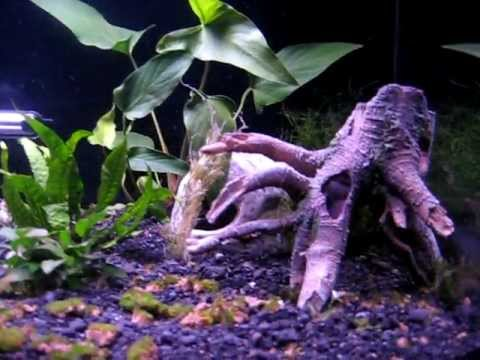 SeaClear Acrylic 40 gallon Aquarium - fishless nitrogen cycling
