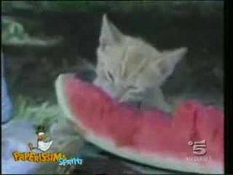 funny cat videos. Funny Cats Compilation-