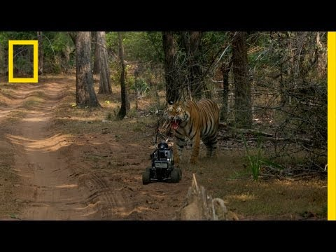 National Geographic Live! - Robot vs. Tiger