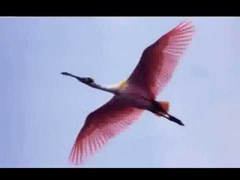 Imagens do Brasil - Pantanal - Mato Grosso do Sul
