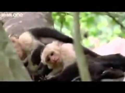 Los animales Graciosos de la selva xD