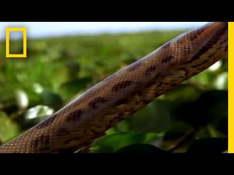 Best '08! Anaconda Hunts