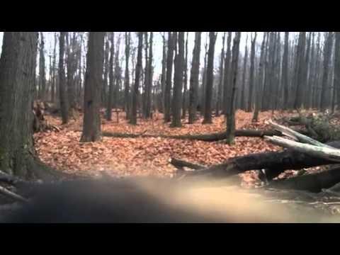 Deer season 2012-9