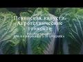 Выращивание пекинской капусты: основы и секреты урожая .