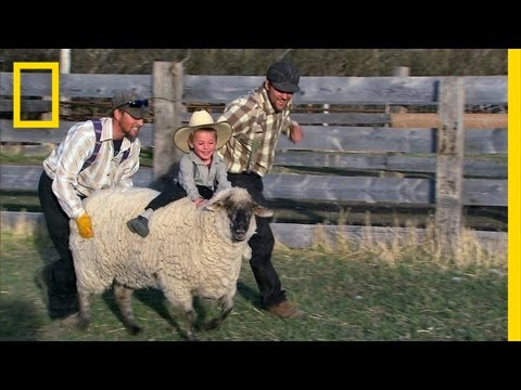 American Colony: Meet the Hutterites - Mutton Busters
