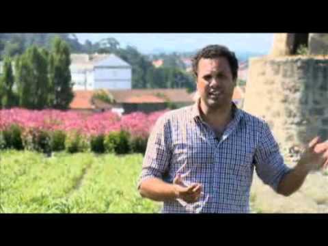 O potencial das Plantas Aromáticas em Portugal - reportagem Biosfera
