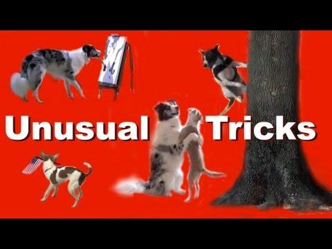 Unusual Dog Tricks