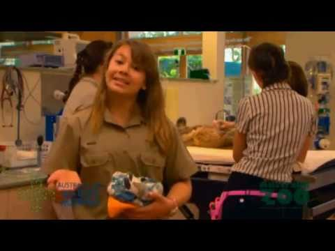Bindi Irwin - Australia Zoo's Emergancy Wildlife Hospital Tour