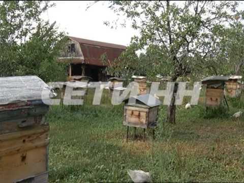 В Выксе пчелы насмерть закусали лошадь