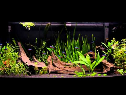 180l juwel rio planted dwarf cichlid tank new substrate for Black sand fish tank