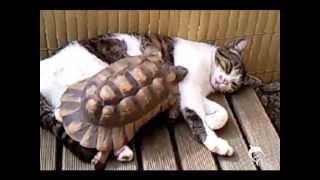 猫が寝てる上を亀が通過していくだけ。なぜそこを通るw。