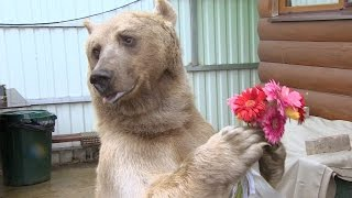 Один день с… Один день с медведем Степаном
