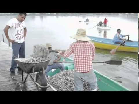 (Climate Change)  Kills Thousands of Fish Dead in Mexico Lake   9/2/14