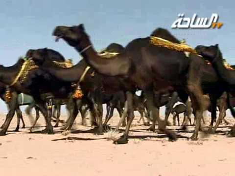 جديد 2013 | مرجحات | منقية الشيخ / عجاب فرج حنيان الحنتوشي العتيبي