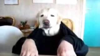 Pies je przy stole