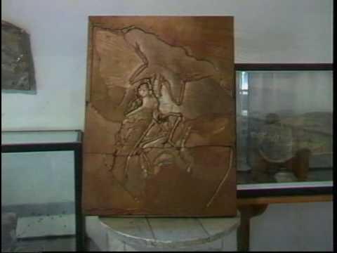 Museu de Paleontologia e Malacologia