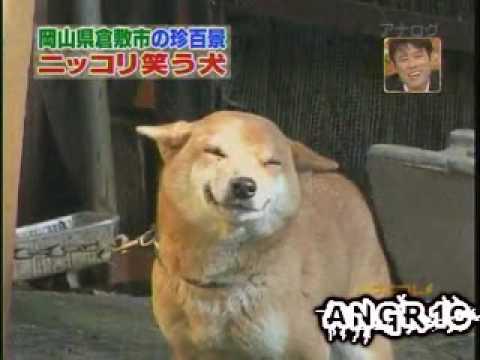 Pas koji se smeje