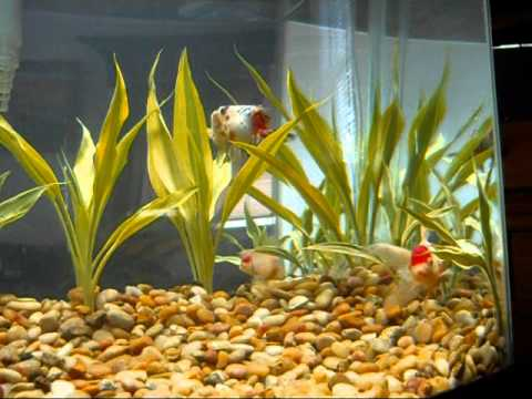 28 Gallon Freshwater Goldfish Aquarium