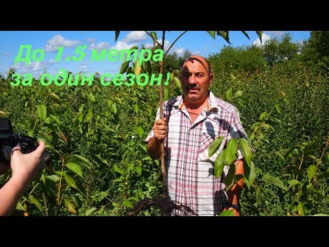Купить саженцы плодовых