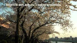 隅田川の桜 2011年