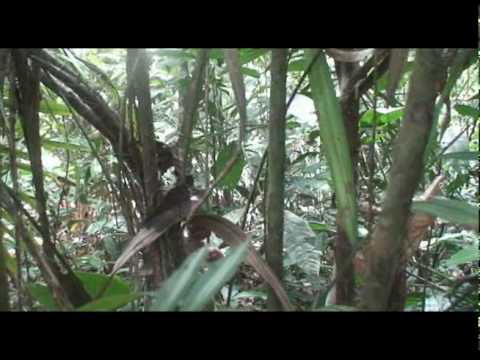 fauna del amazonas colombiano 3
