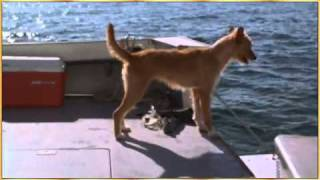 Dolphin and Dog - World Animal Day - Song of the Seas by Vangelis.wmv
