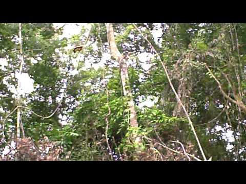リアル・アマゾンの旅! Part2.アマゾン川をカヌーでGo♪