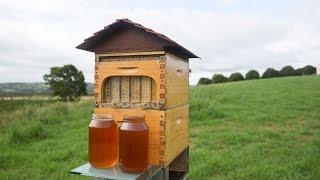 <span>Panen Madu Tanpa Merusak Sarang dan Lebah Tidak Stres</span>