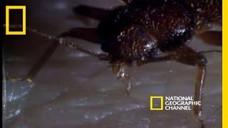 Uykunuzda yatak odanızı işgal etmeye hazır canavarlarla tanışın: Tahta kuruları