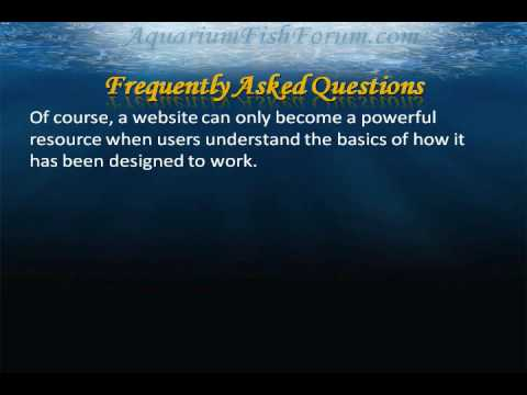 Welcome to the Aquarium Fish Forum Part One
