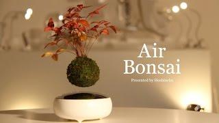 [Official] Hoshinchu | Air Bonsai -Promotional Video-