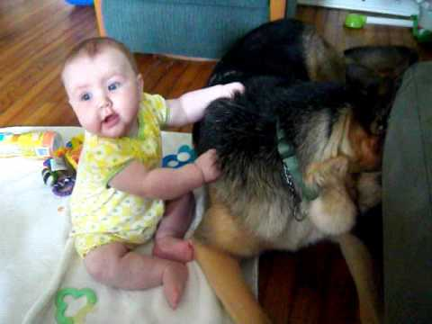 German Shepherd and 5 month old baby