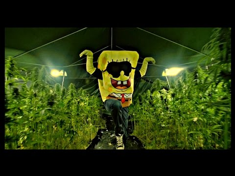 SpongeBOZZ - Planktonweed ►Planktonweed Tape 17.04.2015◄ prod. by Digital Drama ►(JB-EXCLUSIVE)◄