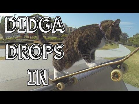 شاهد بالفيديو : قطة تتزحلق ببراعة على لوح خشبي