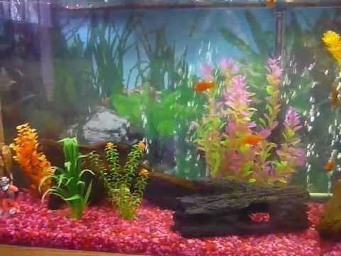 Added Driftwood to 55 Gallon Aquarium