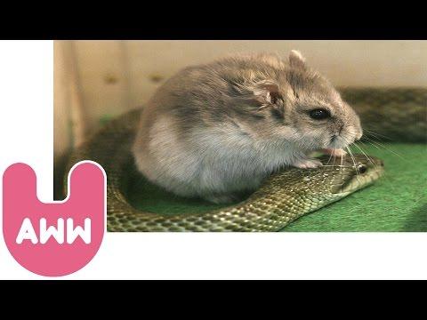 Animals that Adopt Other Animals