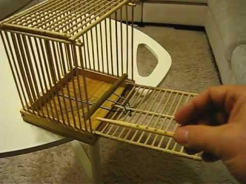 Фото ловушки для птиц своими руками