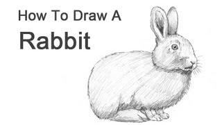 Karakalem portre çizimi videomuzda tavşan karakalem nasıl çizilir
