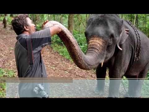 हत्तींशी संवाद साधणारा आनंद
