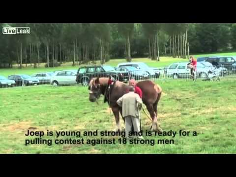 فيديو: 18 رجل يتحدون حصان في لعبة شدّ الحبل.. شاهدوا من الفائز !
