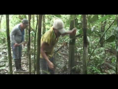 MAS MADERA!: ES LA GUERRA - parte 5