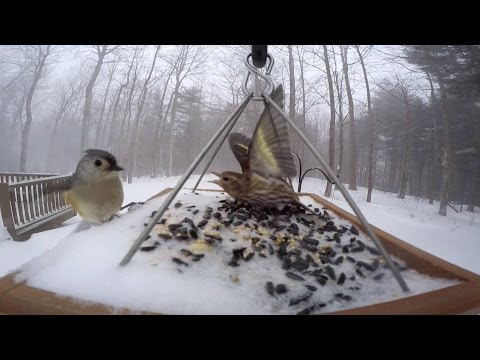 Bird Feeder GoPro: Winter Storm Juno, 2015