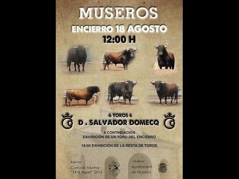 Encierro de Toros de salvador Domecq en Museros