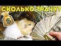 СКОЛЬКО СТОИТ СОДЕРЖАНИЕ МОРСКОЙ СВИНКИ В МЕСЯЦ / SvinkiShow